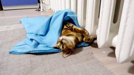 Как утеплить, чтобы не было холодно?